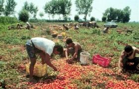 Confartigianato Reggio: «Abusivismo e lavoro nero danneggiano le imprese»